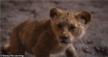 Hình ảnh thế giới loài vật sống động trong Lion King 2019.