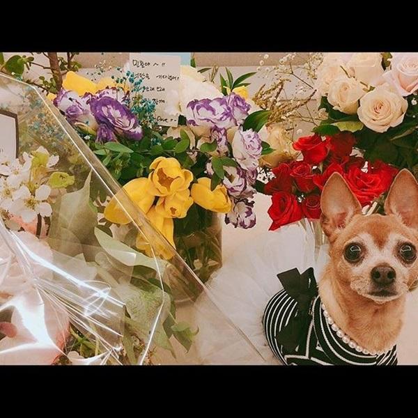 Nhân vật đầu tiên xuất hiện trên Instagram của Lee Min Ho sau 2 năm im hơi lặng tiếng chính là Choco.