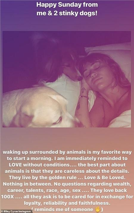Miley có tình yêu vô bờ đối với những chú cún.