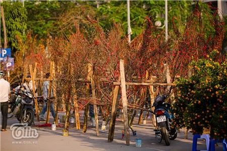 Hoa đào, mai, quất đua sắc khắp phố phường Hà Nội, 'Tết tết tết tết đến rồi!' 1