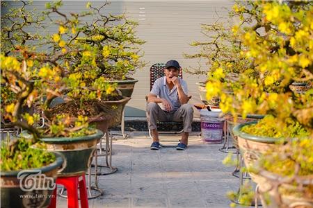 Cây hoa mai nhỏ có giá ít nhất 7 triệu đồng.