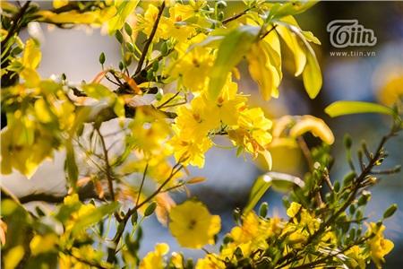 Hoa đào, mai, quất đua sắc khắp phố phường Hà Nội, 'Tết tết tết tết đến rồi!' 10