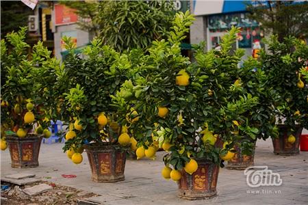 Các loại cây quả sáng rực cả một góc phố.