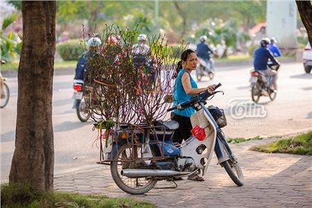 Hoa đào, mai, quất đua sắc khắp phố phường Hà Nội, 'Tết tết tết tết đến rồi!' 23