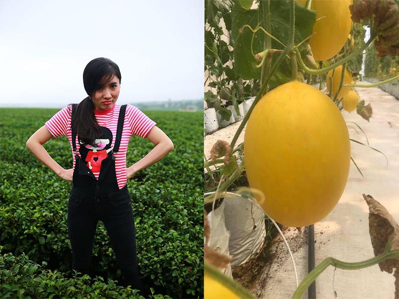 Nữ diễn viên Nguyệt Ánh tận dụng mảnh đất rộng ở Củ Chi, TP HCM để trồng dưa lưới, dưa lê, cô cũng rao bánbán online giao tận nhà