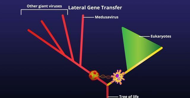 Loại virus cổ đại có thể biến sinh vật trở thành đá như Medusa trong thần thoại Hy Lạp 4