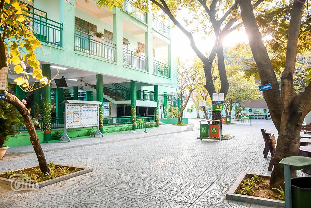 Bài toán bố trí cây xanh trong trường học sao cho hợp lý trở thành điểm nóng thời sự, trong bối cảnh mưa dông xuất hiện ngày càng nhiều, các trường nên tỉa cành, chèn chống gốc cây để hạn chế những tai nạn thương tâm xảy ra.