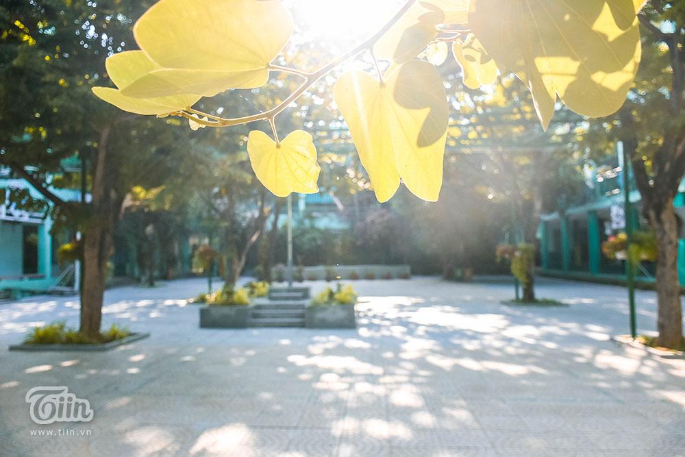 Chùm ảnh: Cây xanh trong trường học và nỗi ám ảnh gãy, đổ vào mùa mưa 16