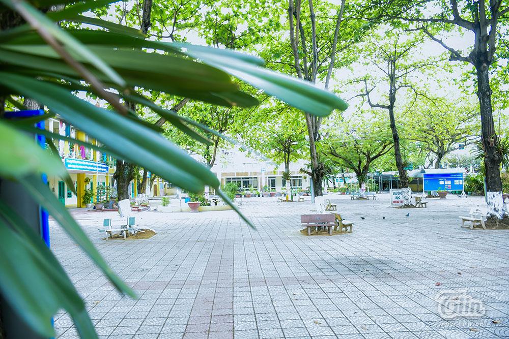 Chùm ảnh: Cây xanh trong trường học và nỗi ám ảnh gãy, đổ vào mùa mưa 18