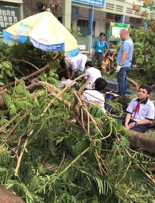 Cây phượng lớn trong sân Trường THCS Bạch Đằng bị đổ khiến 1 học sinh tử vong.