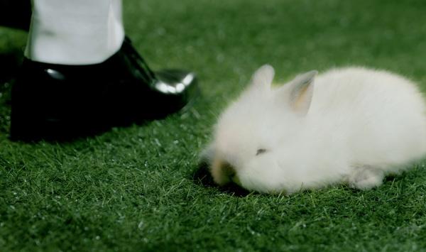 Chú thỏ Bông xuất hiện trong loạt MV của K-ICM từ đầu năm đến nay