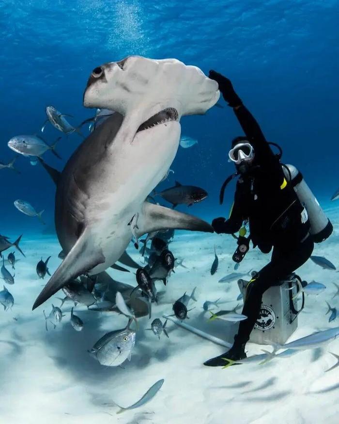 'Sởn tóc gáy' cảnh thợ lặn dùng máu tươi dẫn dụ cá mập đầu búa 0