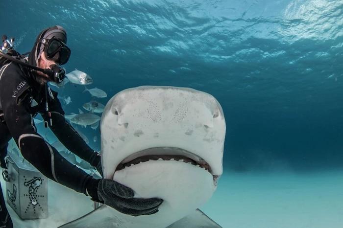 'Sởn tóc gáy' cảnh thợ lặn dùng máu tươi dẫn dụ cá mập đầu búa 4