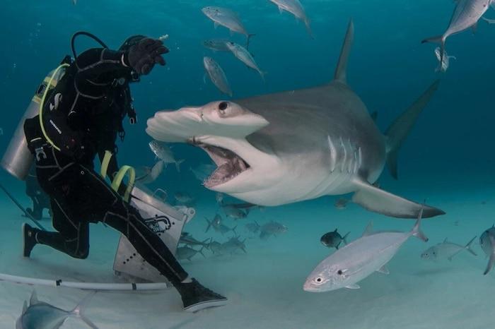 'Sởn tóc gáy' cảnh thợ lặn dùng máu tươi dẫn dụ cá mập đầu búa 3