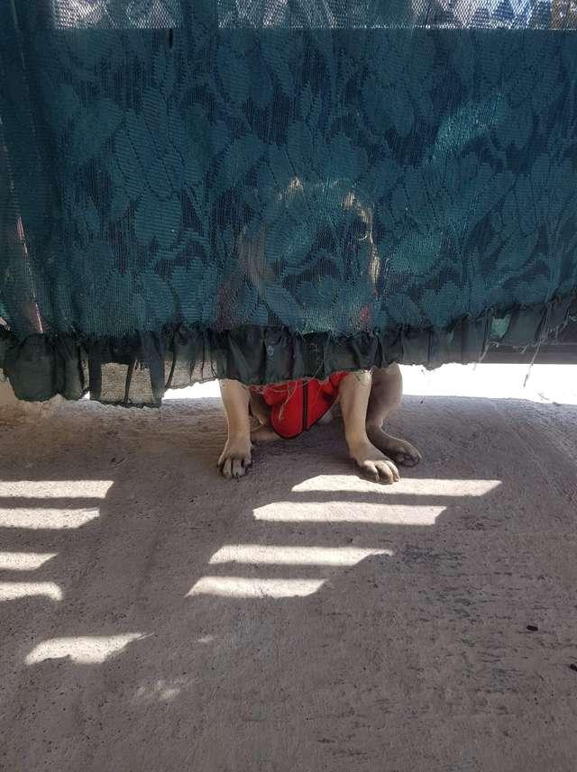 Cún cưng nhiều năm trời thử lòng chủ bằng cách giả vờ biến mất nhưng chọn nơi lẩn trốn là chỗ nguy hiểm và lộ thiên nhất 0