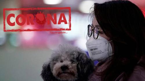 Hong Kong: Một chú chó bị cách ly vì dương tính với virus Corona