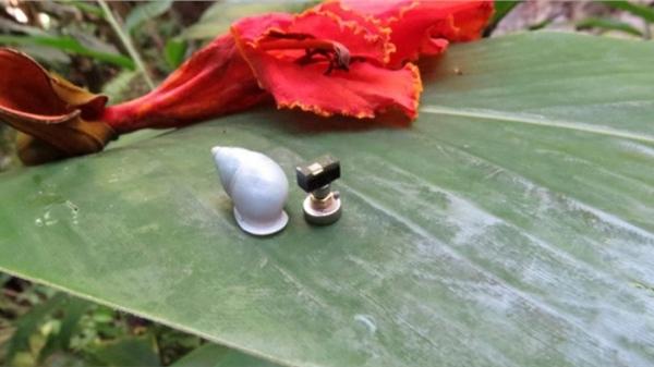 Gắn máy tính nhỏ nhất thế giới trên lưng một con ốc sên, các nhà khoa học phát hiện ra bí quyết sinh tồn độc đáo