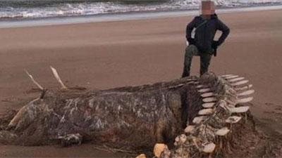 Bí ẩn bộ xương khổng lồ trên bờ biển Scotland, bị đồn thổi là 'quái vật hồ Loch Ness'