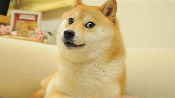 Một ai đó vừa chi ra 92 tỷ đồng để sở hữu meme huyền thoại nhất trong lịch sử Internet