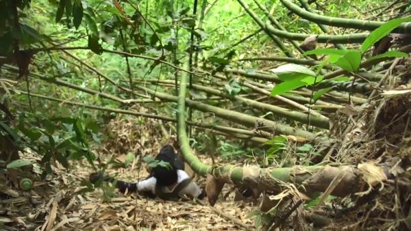 Phương Anh Đàotrượt ngã khi một thân một mình đi vào rừng sâu