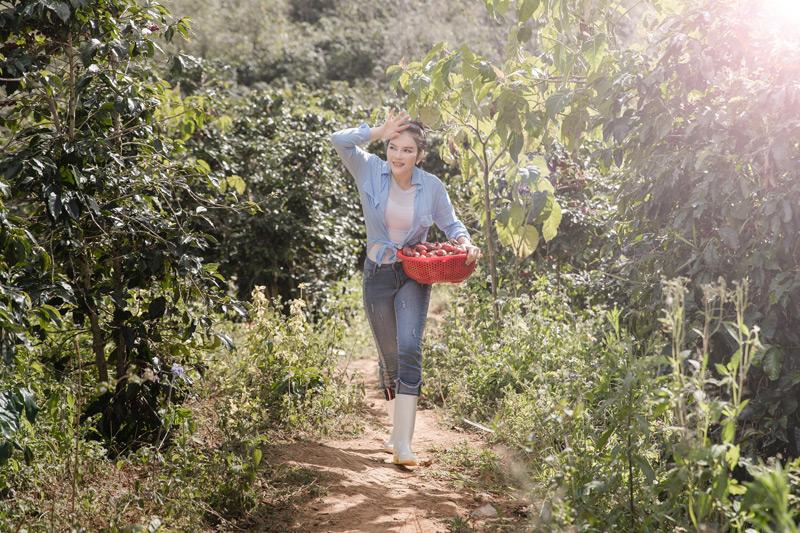 Lý Nhã Kỳ giản dị trong quần jeans, áo thun trắng đơn giản, khoác ngoài là chiếcsơ mi mỏng cùng đôi boots cao su chuyên dụng để đi thu hoạch cà chua và rau xà lách.